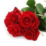 Букет роз премиум, 5 шт