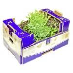 Микрозелень подсолнечника 60г