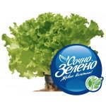 Салат листовой (в горшочке), 100г