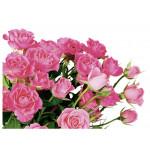 Букет кустовых роз L-40 9 шт