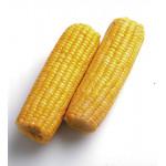 Кукуруза сладкая
