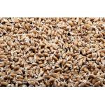 Проростки пшеницы в лотке, 150гр