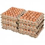 Яйцо куриное С-1 360 шт